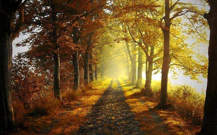 orman yolu resimleri