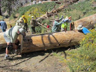 Removing a deadfall