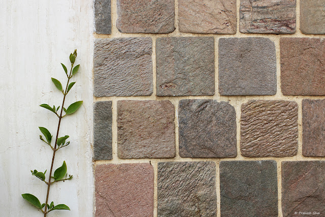 Minimalist Image of a Green Blooming plant growing just along the side of a brick pattern wall.