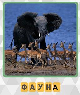 на берегу различная фауна на 5 уровне в игре 600 слов