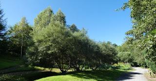Jardín Botánico de Gijón.