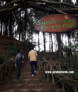 Sumbersuko Forest, Wagir, Malang