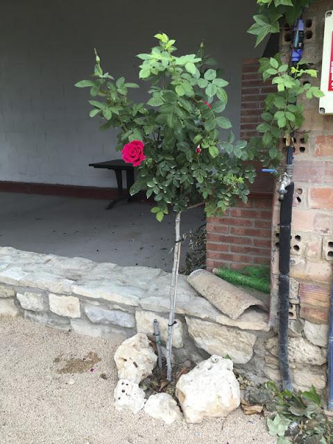 Huerto urbano luis servia borgas reproducci n rosales for Viveros el rosal