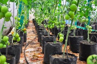 Agribusiness loans kenya kilimo