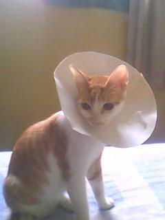 b3be5f2e3 No blog CRÔNICAS MAL PASSADAS tem um passo a passo de como fazer um colar  elizabetano para gatos com cartolina.