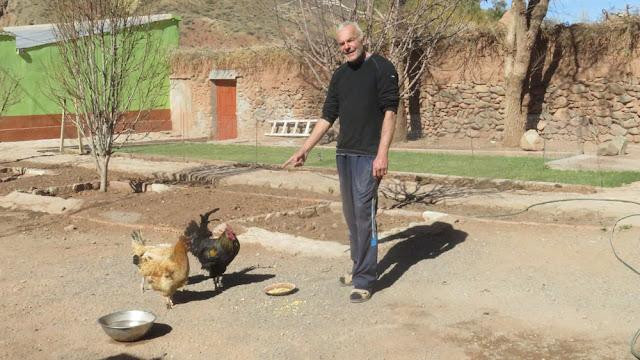 Die Hühner legen wieder Eier nach dem Kälteschock