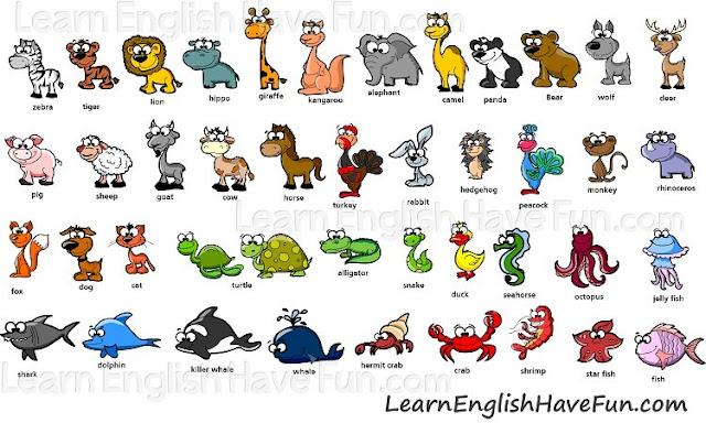 أسماء الحيوانات (ذكور - اناث ) (صغار و المجموعة التى تنتمى اليها) animals in english
