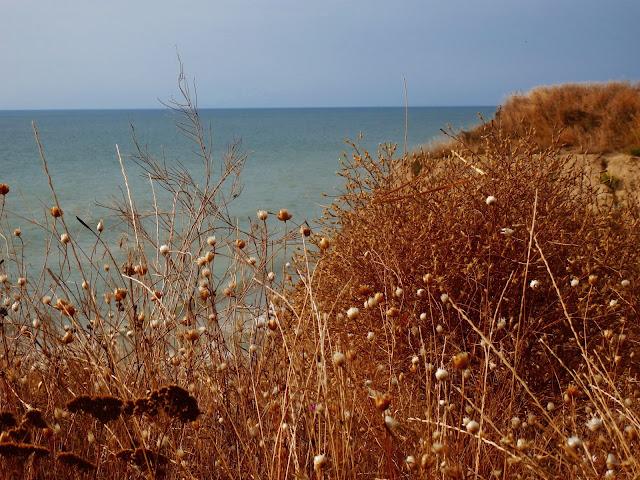 Stepowe trawy dochodzą do klifu i morza