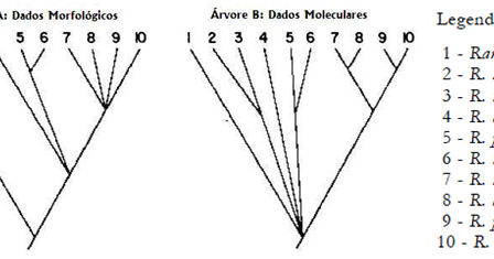 Prof. Job Fonsêca: Lista de Sistemática Filogenética