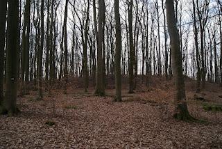 Im Wald befindet sich ein kleiner Wall, der mit Laub bedeckt ist.