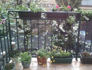 kwiaty na balkonie wiosną