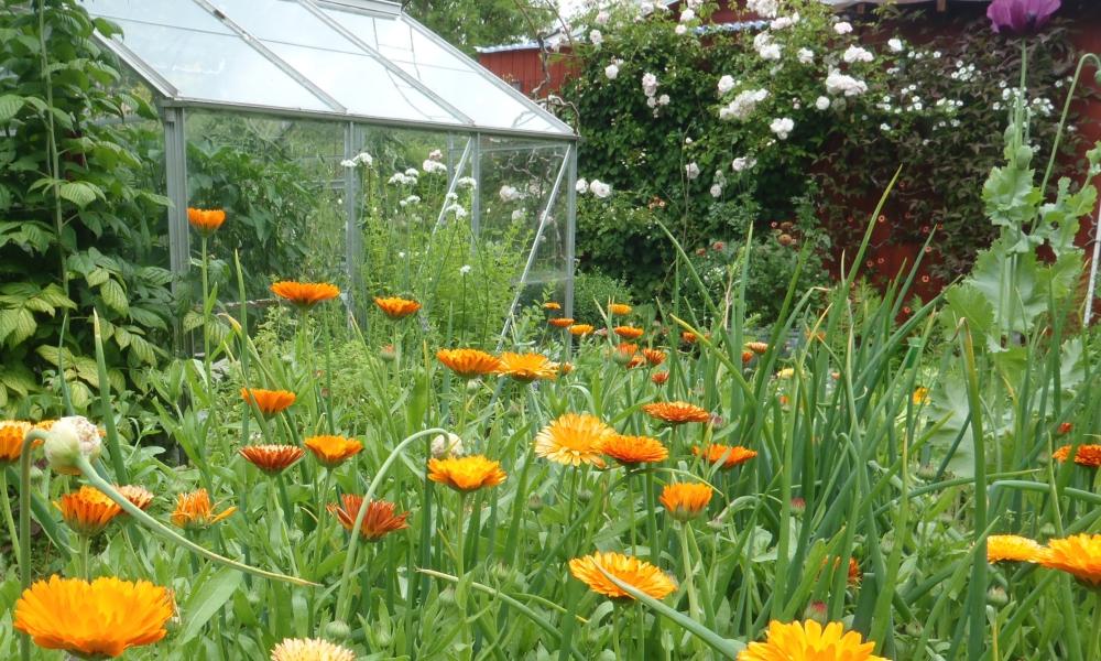 Randers Havekreds: Idéer til en bæredygtig have