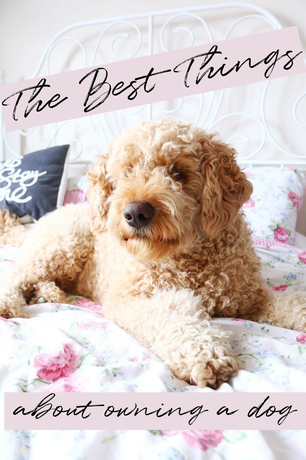 The Best Things About Having A Dog