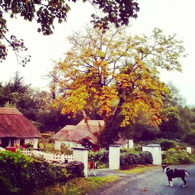 autumn scene at