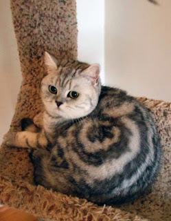 Что означает цвет кошки. перебежавшей дорогу, приметы на удачу и несчастье