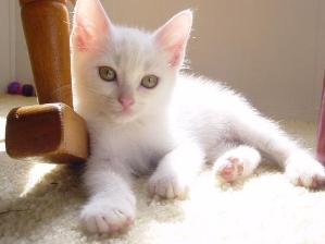 Cat Care Diarrhea In Cats