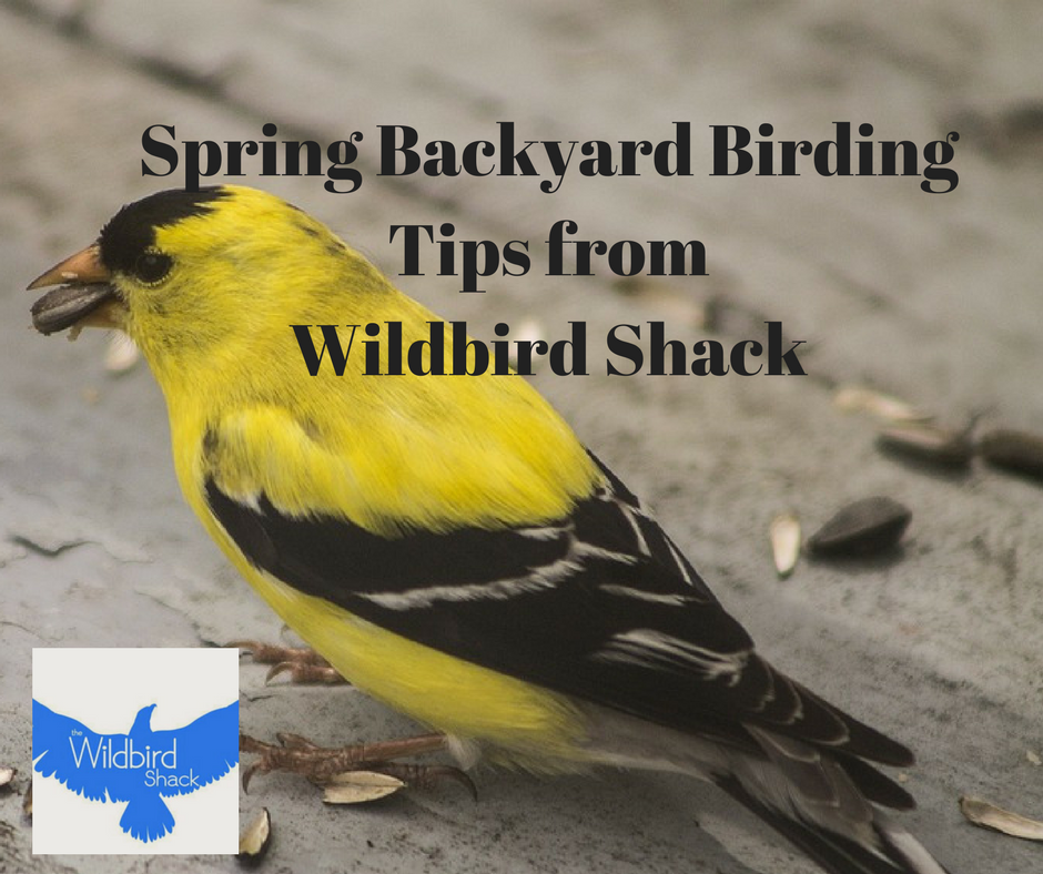 Spring Backyard Birding Tips From The Wildbird Shack In Mount Prospect