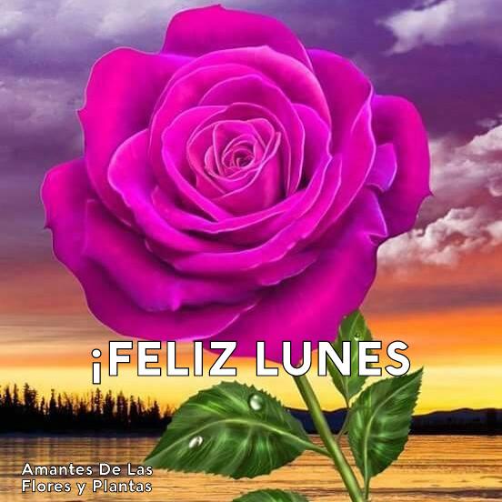 Flores Y Plantas Feliz Lunes
