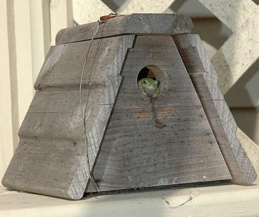 Unique And Creative Birdhouse Designs