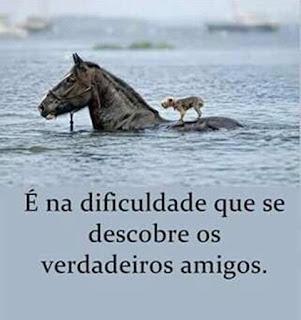 Cavalo carrega cão em água de rio.
