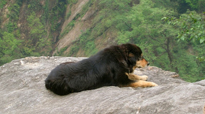 Indian Dog Breeds Price list