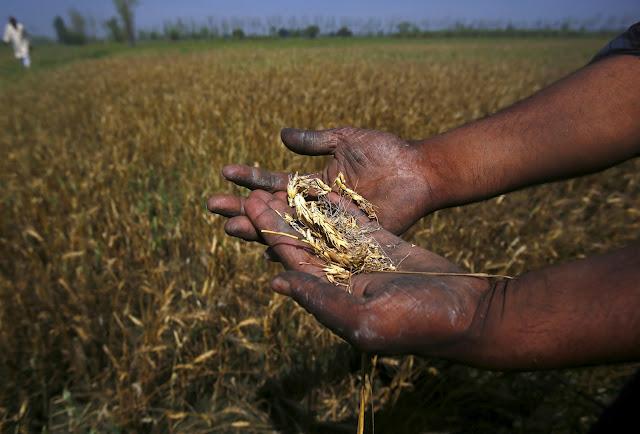 आग से बर्बाद फसल के लिए मिलेगा किसानों को मुआवजा