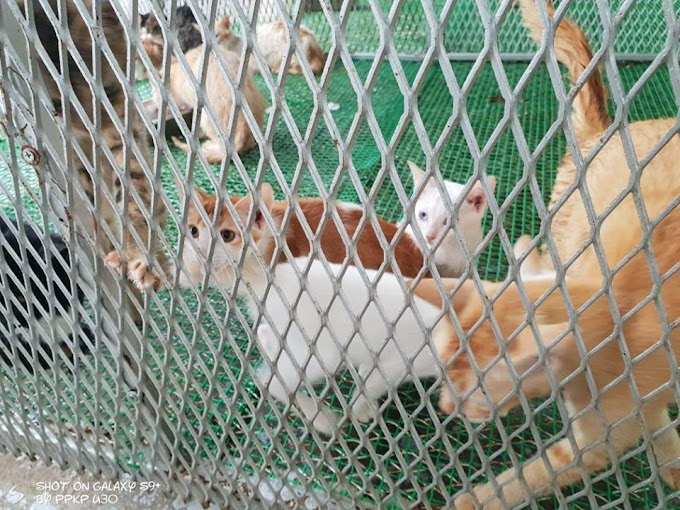 Mohon Adopt Kucing & Anjing dari Pusat Kurungan Pest di Miharja Cheras DBKL #urgent