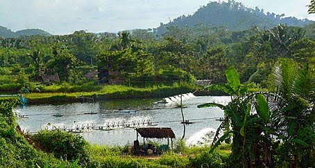 Shrimp and Fish farming in south Thailand