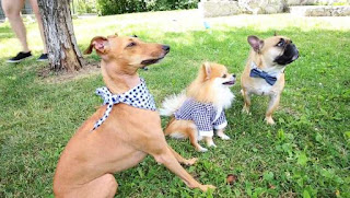 http://www.torontosun.com/2016/07/30/meet-the-three-dogs-who-are-way-more-popular-than-you-on-the-internet