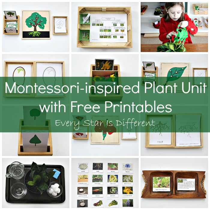 Montessori-inspired Plant Activities with Free Printables