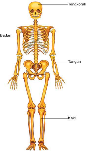 Obat nyeri tulang yang bagus