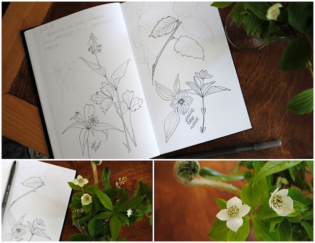 Sketchbooks, sketches, Eva Shorey, Sketchbook Conversations, My Giant Strawberry