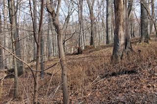 Elk - Lone Elk Park, Missouri