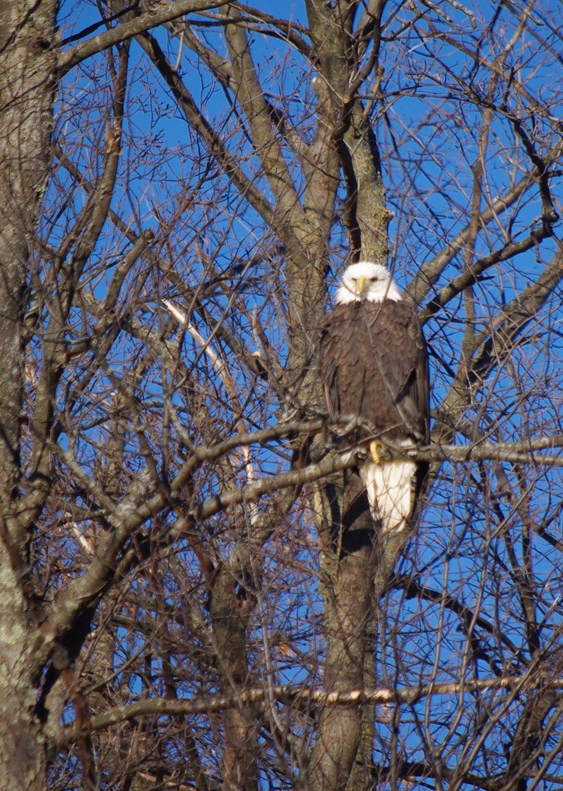 Life In Rice Lake Wi The Birthday Eagle