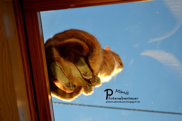 Katze Mimi von unten