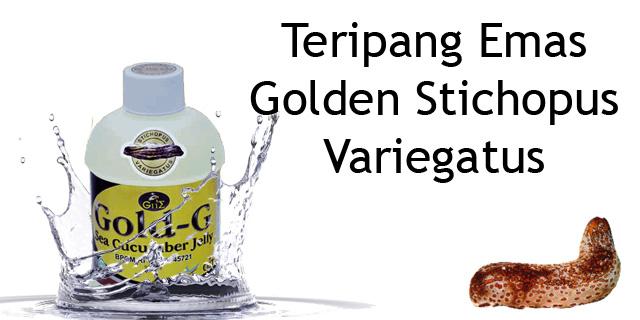 Cara Pengobatan Asam Urat Dengan Obat Herbal Jelly Gamat Gold-G