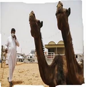 el Virus de los Camellos
