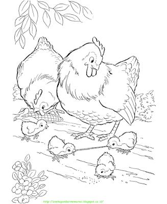 Gambar Mewarnai Ayam - 15