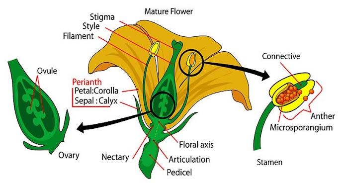 वनस्पति विज्ञान - प्रश्न उत्तर