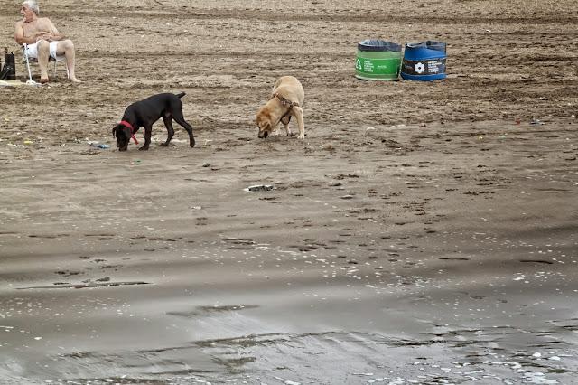 Dos perros en la playa.