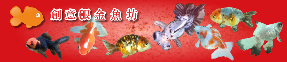 創意眼金魚坊-專營精緻金魚、特殊金魚、優質金魚,買金魚、找金魚請來的專業金魚水族館、金魚專賣店、金魚專門店,歡迎在開店時間現場參觀