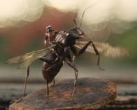 Ant-Man montando sobre una hormiga con alas