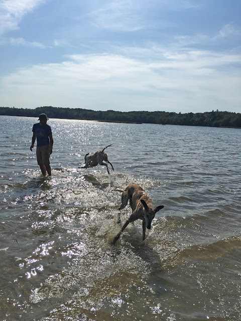 vacation, Beaver Island, Font Lake, retired racing greyhounds, Anne Butera, My Giant Strawberry