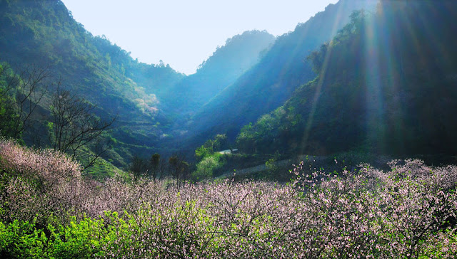 4 pretty irresistible flower seasons in Moc Chau