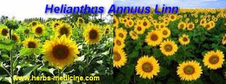 benefit flower sun for Hypertension