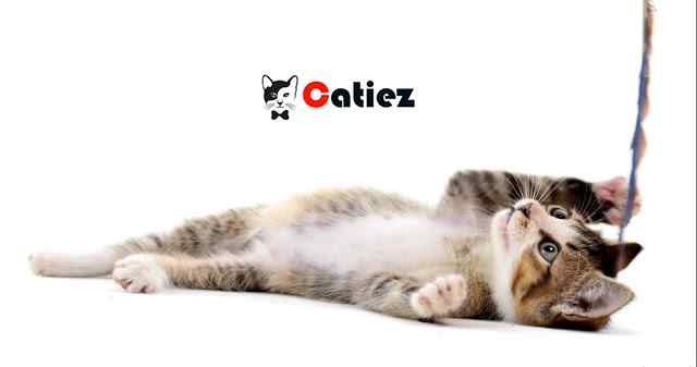 Asian Cat Breed