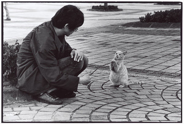 吳毅平攝影作品