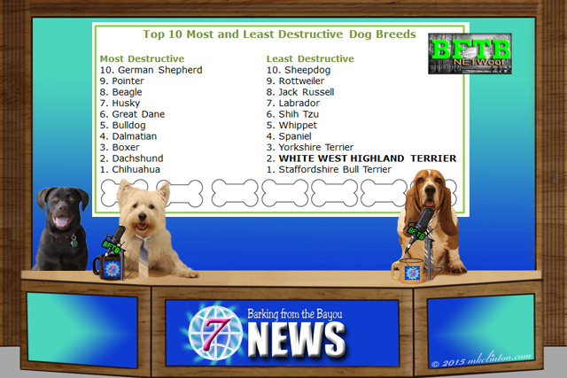 BFTB NETWoof News screenshot with 10 most/least destructive dogs