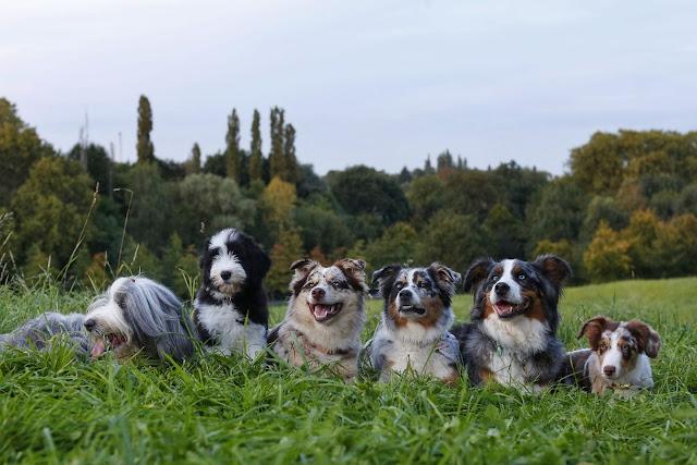 Aussieblog, Indianermädchen, Wildfang, Hund, Hundeblog, Erik Räven