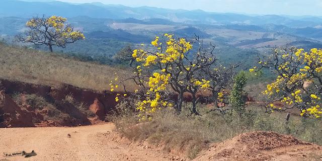Ipê, Caminho dos Diamantes, Estrada Real